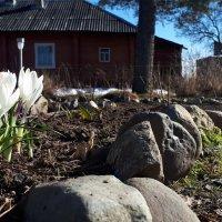 первые цветы под солнцем :: Юлия Стальнова