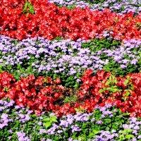 Цветочный ковёр. :: Aleksandr
