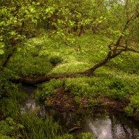 лесная река Крапивня :: Василий Королёв