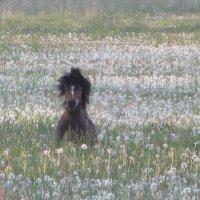 Пони тоже кони...) :: Mariya laimite