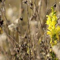 Живой цветок :: Константин Иноземцев