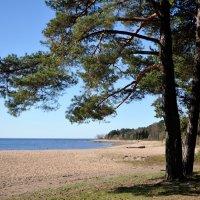 на Финском заливе... #5 :: Андрей Вестмит