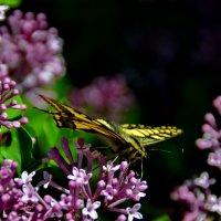 Разноцветье природы. :: Aleksandr Ivanov67 Иванов