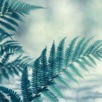 Нежность леса :: Эльмира Суворова