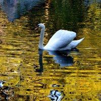 На осеннем пруду :: Татьяна Лютаева
