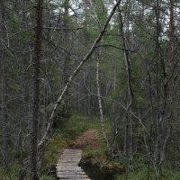 Весенний лес :: Ольга