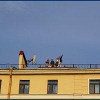 Жизнь на крыше :: san05   Александр Савицкий