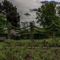 Все в сад :: Александр Липовецкий