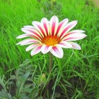 Цветок :: Михаил Пахомов