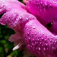 Цветы в каплях воды :: Наталья (ShadeNataly) Мельник
