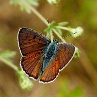 летающий цветок 5 :: Александр Прокудин