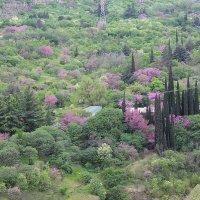 Вид на ботанический сад в Тбилиси! :: Светлана Масленникова