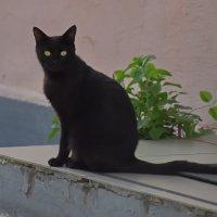 Если чёрный кот... :: Николай Саржанов