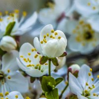 Весна :: Сергей Манекин