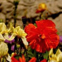 весенние краски :: Александр Прокудин
