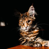 кошка :: Юля Тихонова