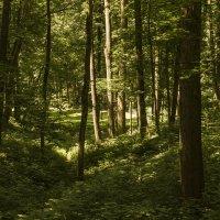 в лесу :: Петр Беляков
