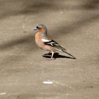 Птичка невеличка :: Татьяна Иванова
