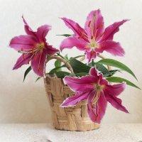 Прекрасных лилий милое созвездие :: * vivat.b *