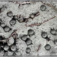 Заморозка на компот :: алекс дичанский