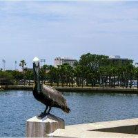 Гордской пеликан :: Яков Геллер