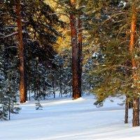 Зимний лес :: Елена Богомазова