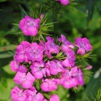 цветы :: Аня Журавлёва