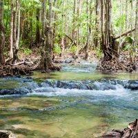 Река в джунглях. :: Olga Vetrova