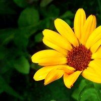цветок :: Диана Гилева