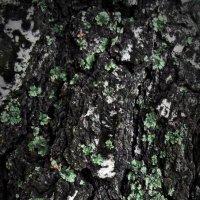 красота на дереве :: Диана Гилева