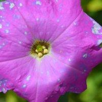 flower 2 :: Юра