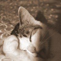 Моя кошка *__* :: Алена Понедельник