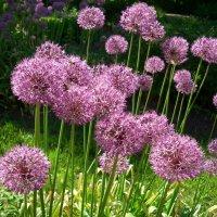 цветы :: Надя Попова