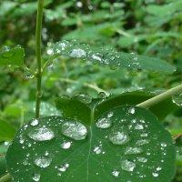 капли дождя :: Надя Попова