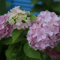 Просто цветы :: Larisa Ulanova