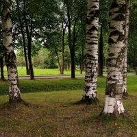 Три берёзы. :: Leonid Volodko