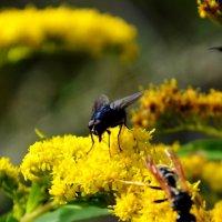 муха на цветке :: Мария Береговая