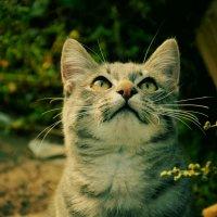 Кошка :: Мария Береговая