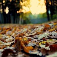 Осень :: Мария Береговая