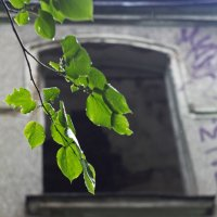 окно :: aiex r