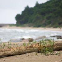 балтийское море :: aiex r