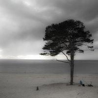 Одинокое дерево :: Наталья Репницына