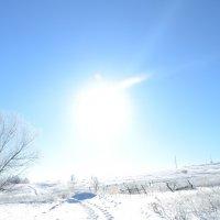 Мороз и солнце! :: Ольга ****
