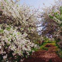 весна :: Ира Кондрашкова