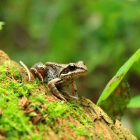 Маленький лягушонок застыл в изумлении :: Maria M