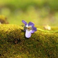 Весна :: Алексей Горша