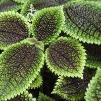 Ботанический сад :: nakip1