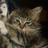 Кошка :: Александр Клявзуник