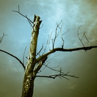 Дерево Бертона :: Макс Райф