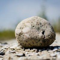 Камень :: Макс Райф
